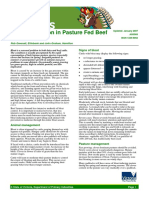 Bloat Prevention in Pasture Fed Beef Cattle