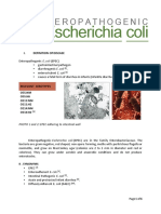 Enteropathogenic Escherichia coli - written report.pdf