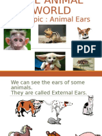 Cl 4 PPT Animal World for Flipped Learning