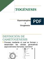 gametogenesis-151015164546-lva1-app6891