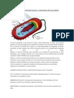 Celulas Procariotas Funcion y Estructura de Sus Partes