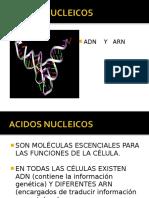 ACIDOS_NUCLEICOS jmm