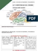 El Cerebro - Estrcutura y Competencias