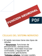 Funcion Neuronal