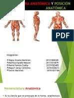 Nomenclatura Anatómica y Posición Anatómica
