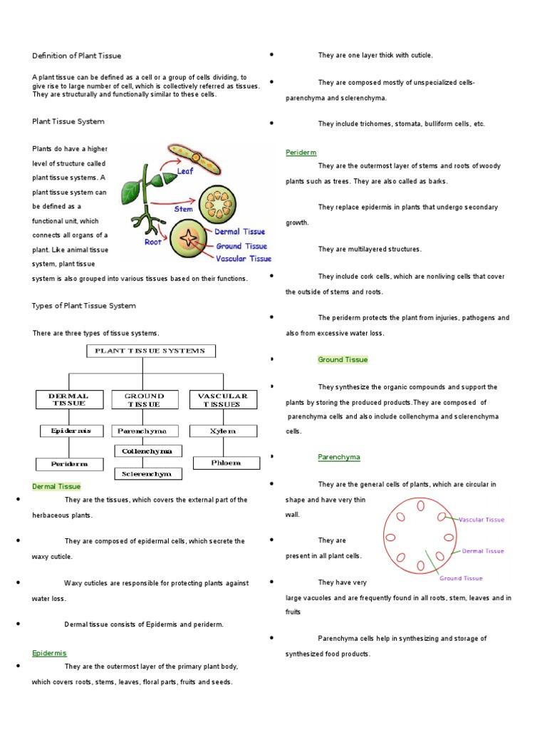 Definition of Plant Tissue | Tissue (Biology) | Bark