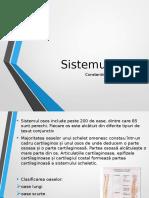 Sistemul osos - Constantinescu Eduard-Matei.ppt