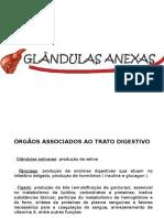 Órgãos Associados Ao Trato Digestivo