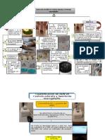 Metodología Extracción y Cuantificación de Adn