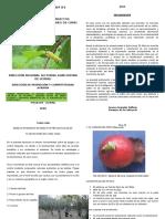 BOLETIN DE CAMU CAMU IV.docx