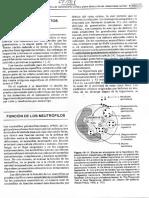 Fagocitosis Metodos de Estudio