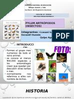 Pylum artrópodos (insectos).pptx