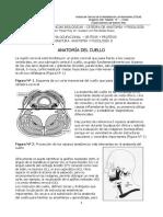41-Anatomia Del Cuello