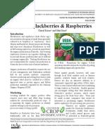 Organic Blackberries & Raspberries