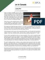 bcspca_factsheet_life_of_an_egg_laying_hen (1).pdf