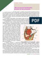 Ascidias.pdf