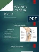 Articulaciones y Músculos de La Pierna