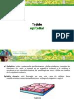 b1 m4 Tejido Epitelial