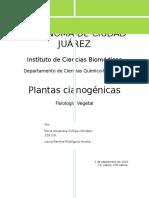 Plantas cianogénicas.docx