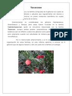Las Taxaceae