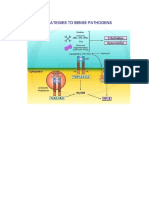 Acute Phase Protein