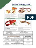 Excretor.pdf