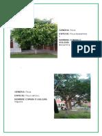 Trabajo Raspa-Inventario de Plantas