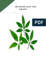 10 Herbal Plants