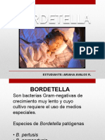 Diapositiva Bordetella