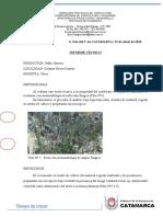 Informe antracnosis olivo.doc
