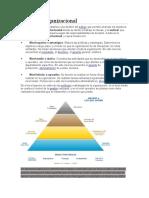 Pirámide organizacional.docx