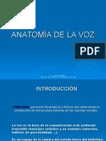 Roura Anatomia Voz
