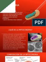 mitocondria xD