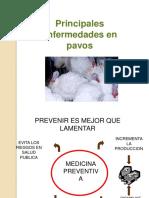 103711284-enfermedades-pavos.pdf