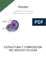 Estructura y Composición Del Núcleo Celular Biologia
