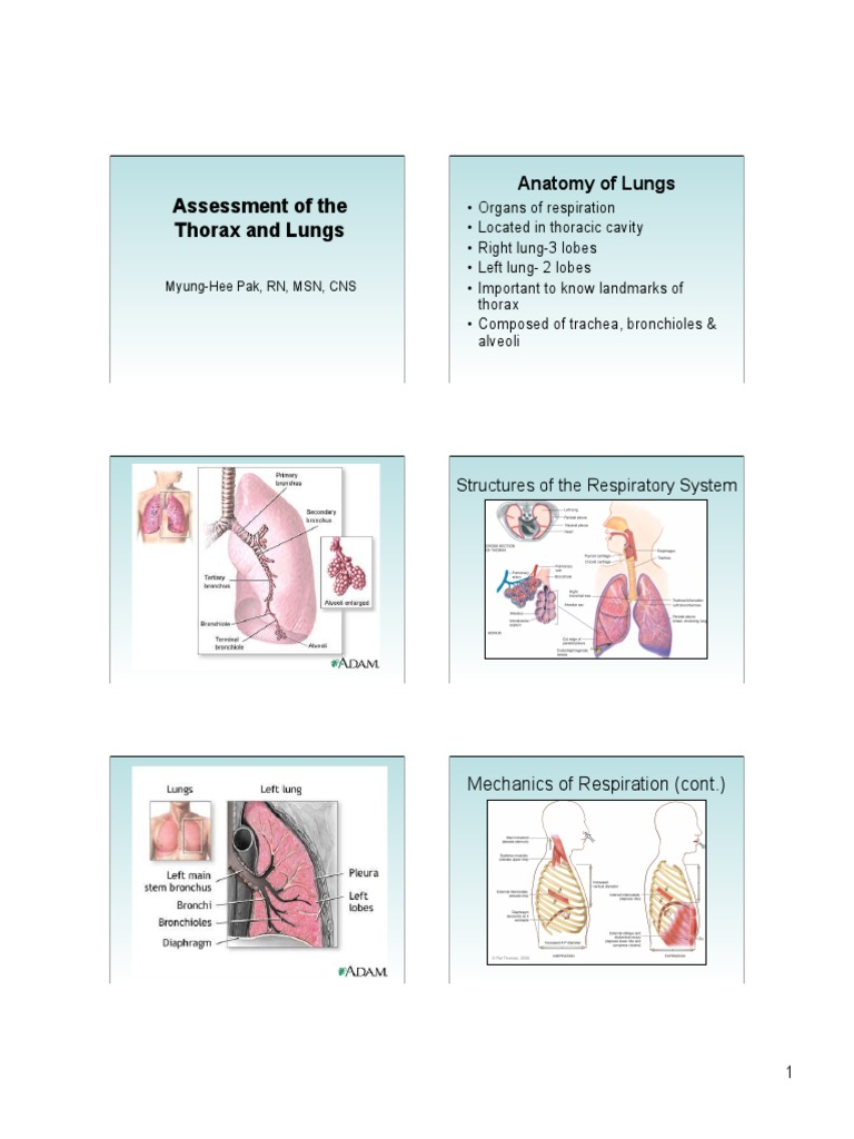 Assessment Of The Thorax And Lungs 2014ppt Thorax Lung