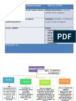 Actividad 1. Cuidado del cuerpo humano (mapa conceptual).pptx