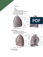 Pulmo and Alveolus