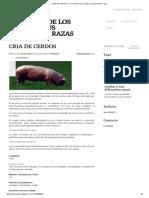 CRIA de CERDOS - El Mundo de Los Cerdos y Sus Diferentes Razas