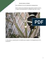 acodos.aereos.y.etiolado(1)