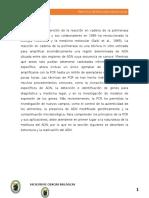 Informe de Pcr
