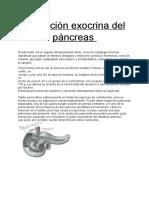 Secrecion Exocrina Del Pancreas