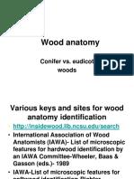 Wood Anatomy Conifer vs Eudicot Woodsprinterfriendly