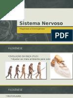 Aula 1 Sistema Nervoso