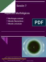 Morfologia microscopica