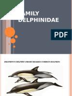 Family Delphinidae
