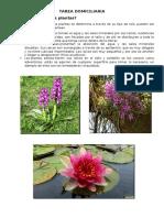 Tarea Domiciliaria - Donde Viven Las Plantas
