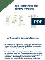 Artrología comparada del miembro torácico 2.pdf