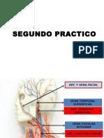 rotulaciones anatomicas