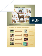 derivados de los animales